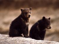 Vt-bears