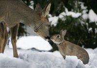 Deer-and-bunny-5