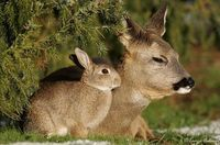 Deer-and-bunny-3