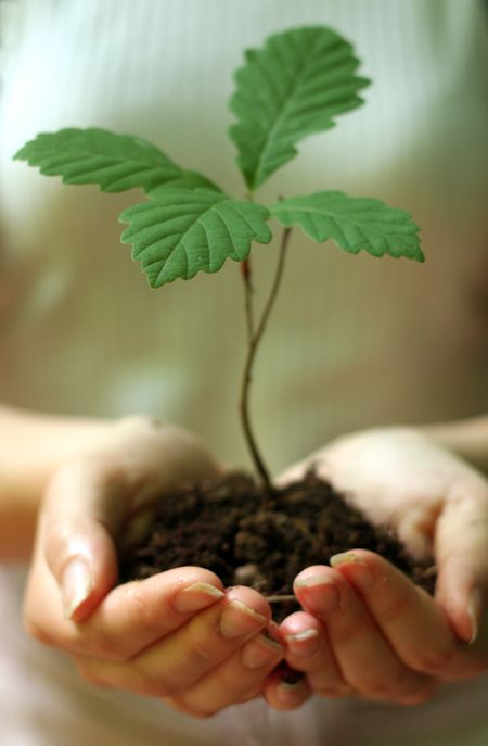 Arbor-day-plant-tree