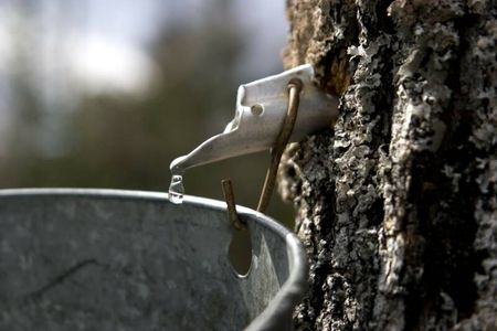Maple Syrup Lovers Unite!   In Vermont. This Weekend.